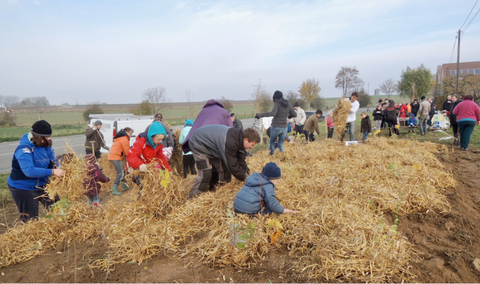Community project creating a native forest in Belgium